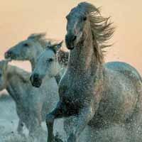 Comprehensive Resource Model depicted as wild horses