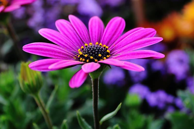 Traumatic Stress Disorder Anniversary Flower